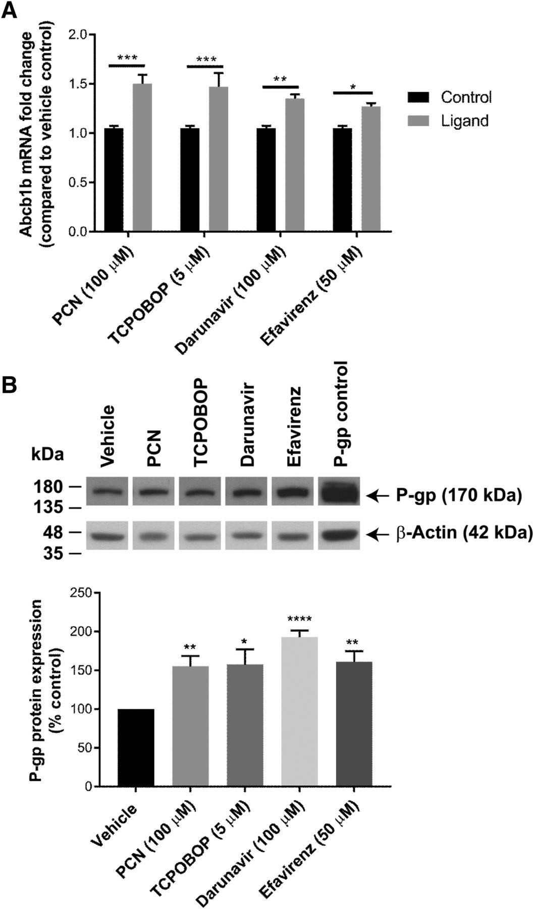 Xenobiotic Nuclear Receptors Pregnane X Receptor and