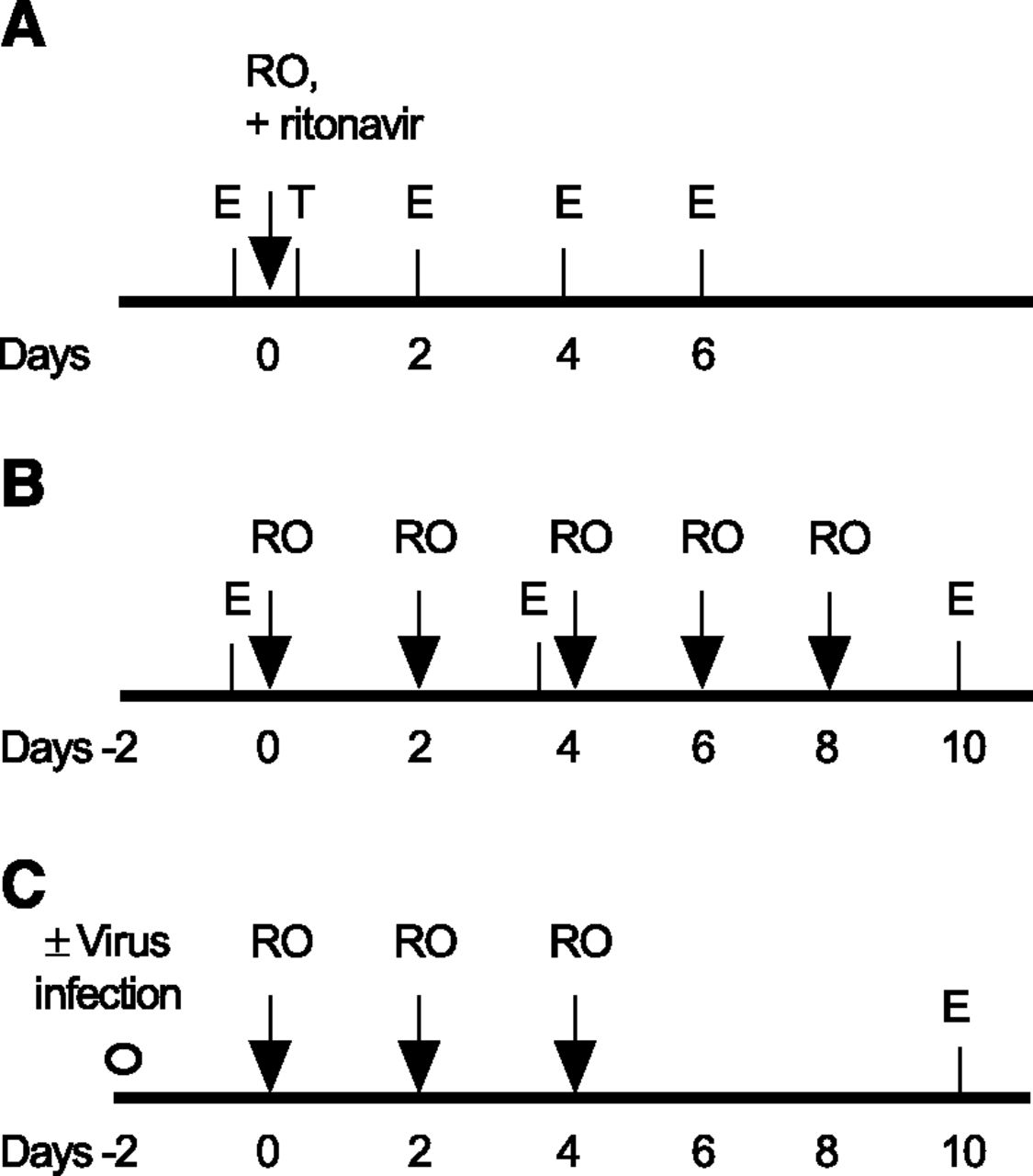 Simultaneous Assessment Of Clearance Metabolism Induction And