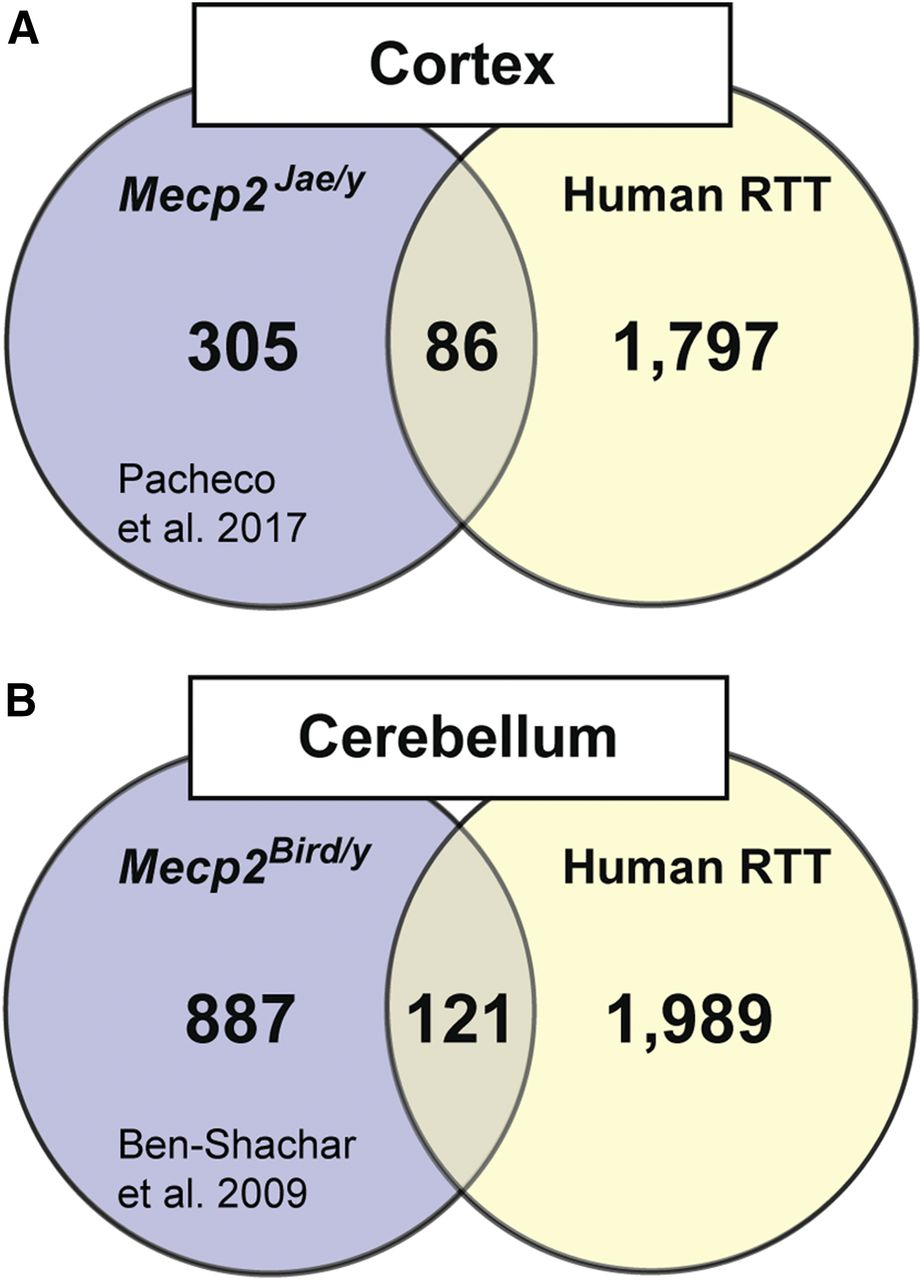 Total RNA Sequencing of Rett Syndrome Autopsy Samples