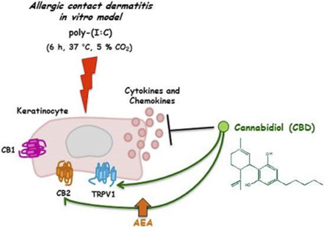 anti inflammatory properties of cannabidiol a nonpsychotropic