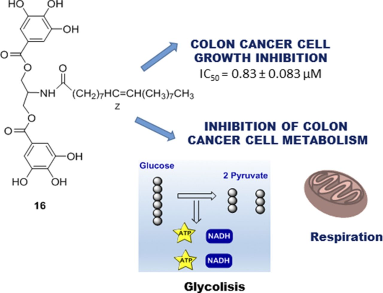 Novel Polyphenols That Inhibit Colon Cancer Cell Growth Affecting
