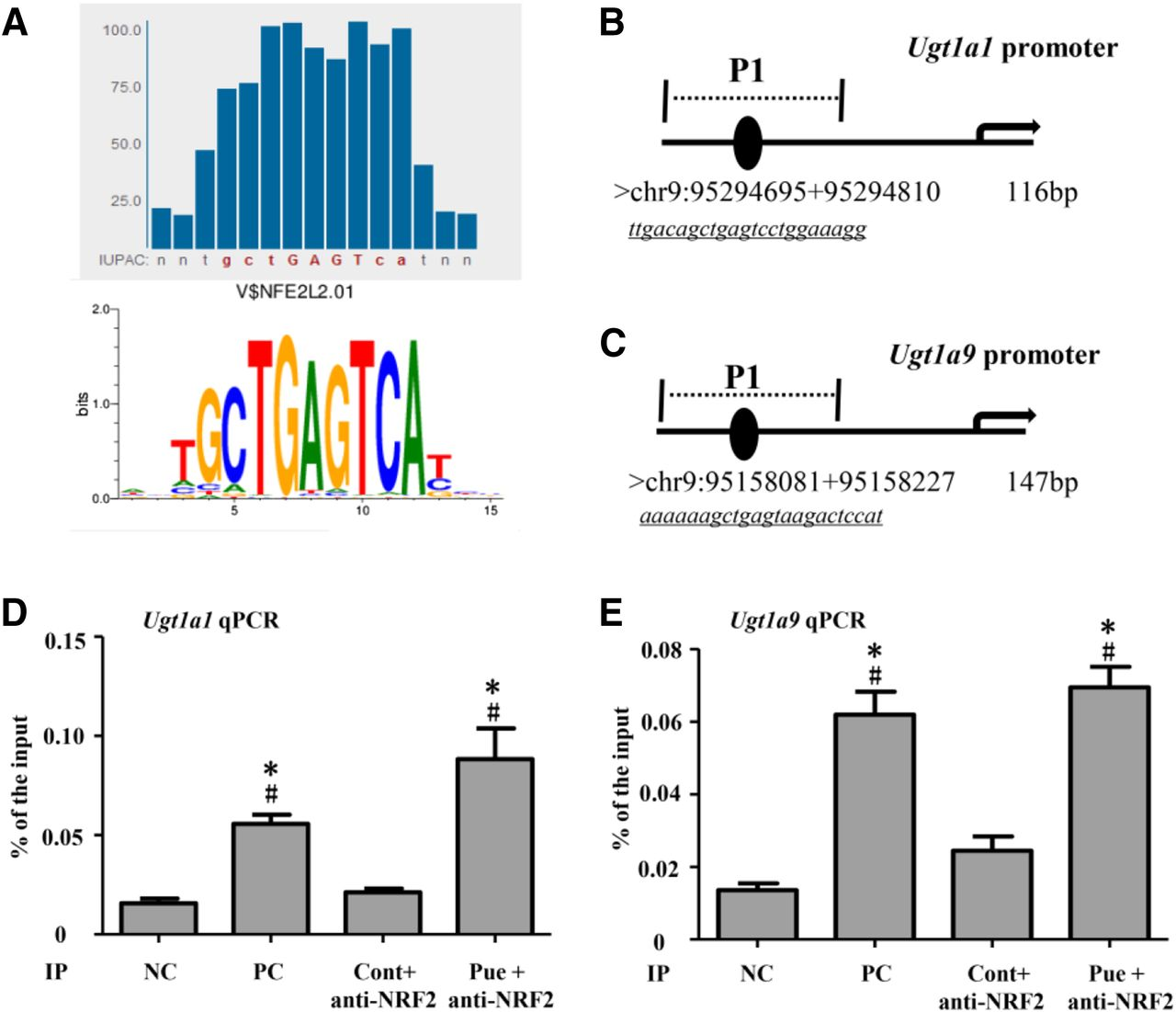 Contributions Of Nrf2 To Puerarin Prevention Of Cardiac