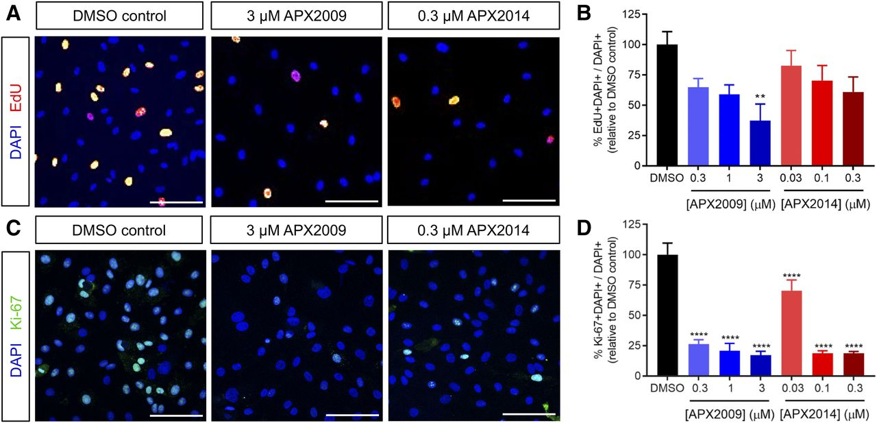 Ref-1/APE1 Inhibition with Novel Small Molecules Blocks Ocular