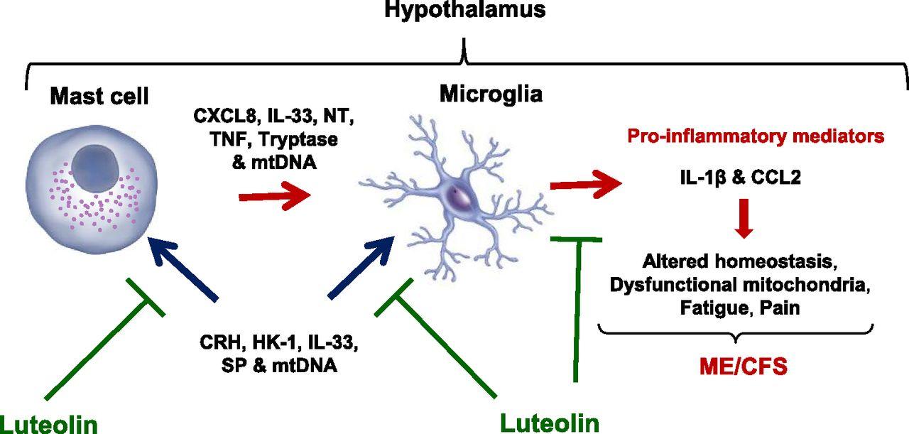 Myalgic Encephalomyelitis/Chronic Fatigue Syndrome—Metabolic