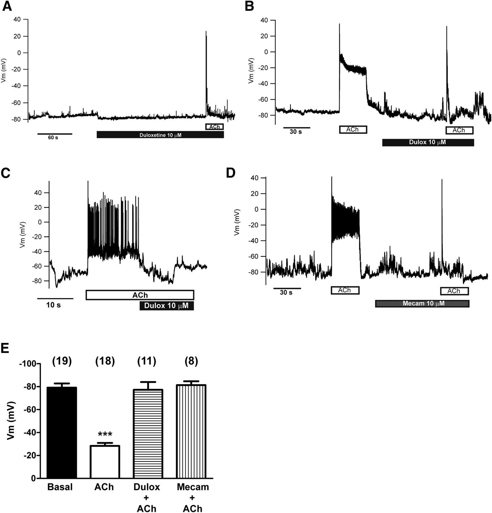 Dual Antidepressant Duloxetine Blocks Nicotinic Receptor Currents