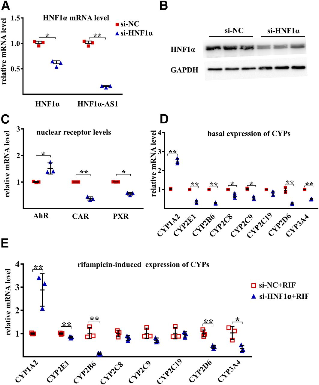 The HNF1α-Regulated LncRNA HNF1α-AS1 Is Involved in the