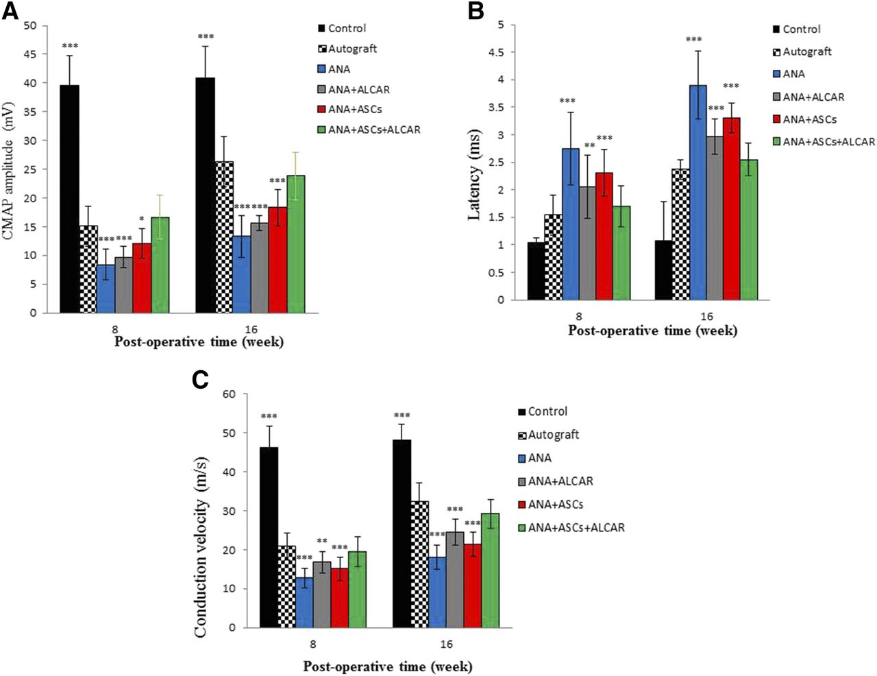 Synergistic Effects of Acetyl-l-Carnitine and Adipose-Derived