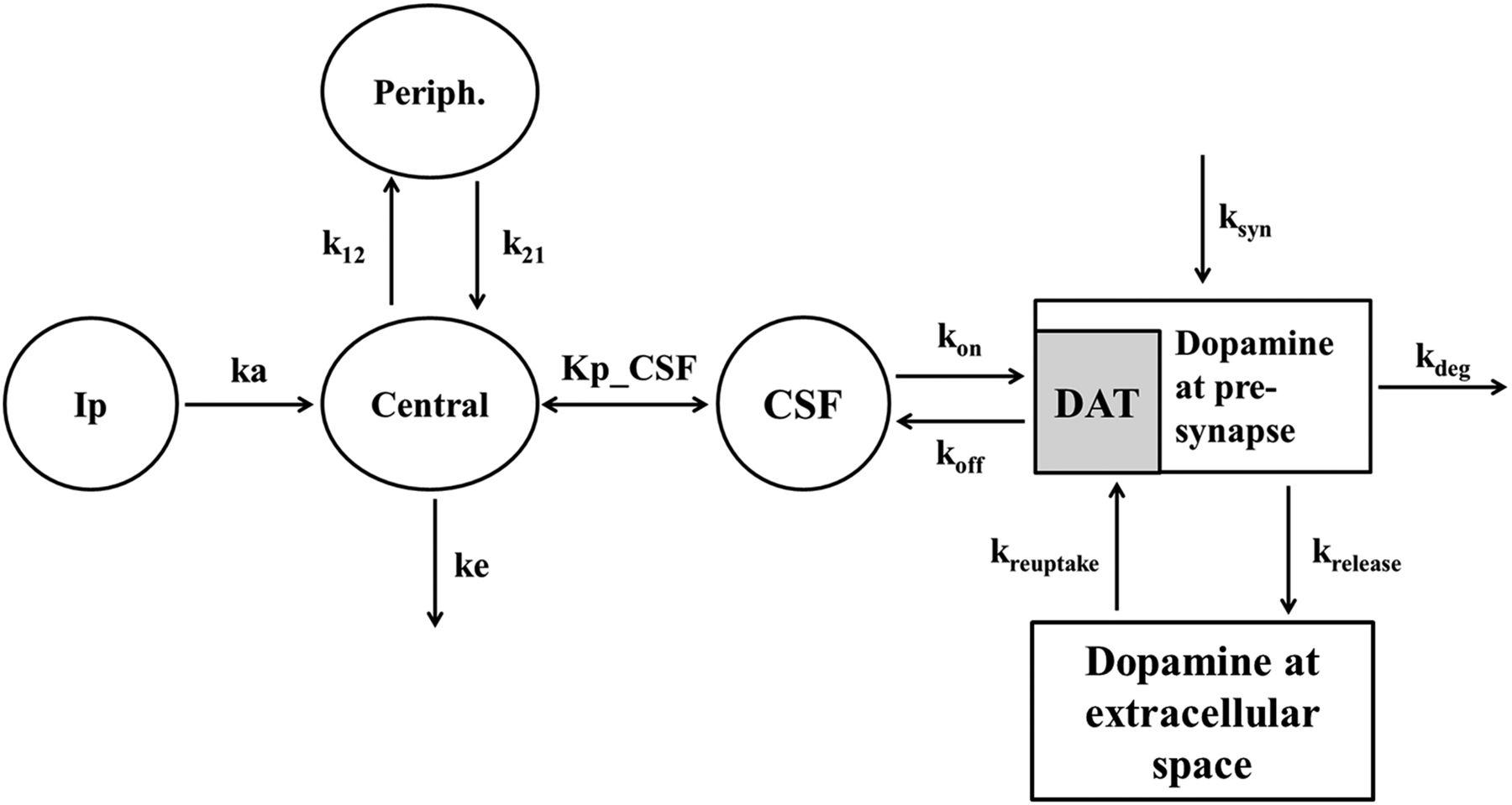 Pharmacokinetic-Pharmacodynamic Modeling of Brain Dopamine