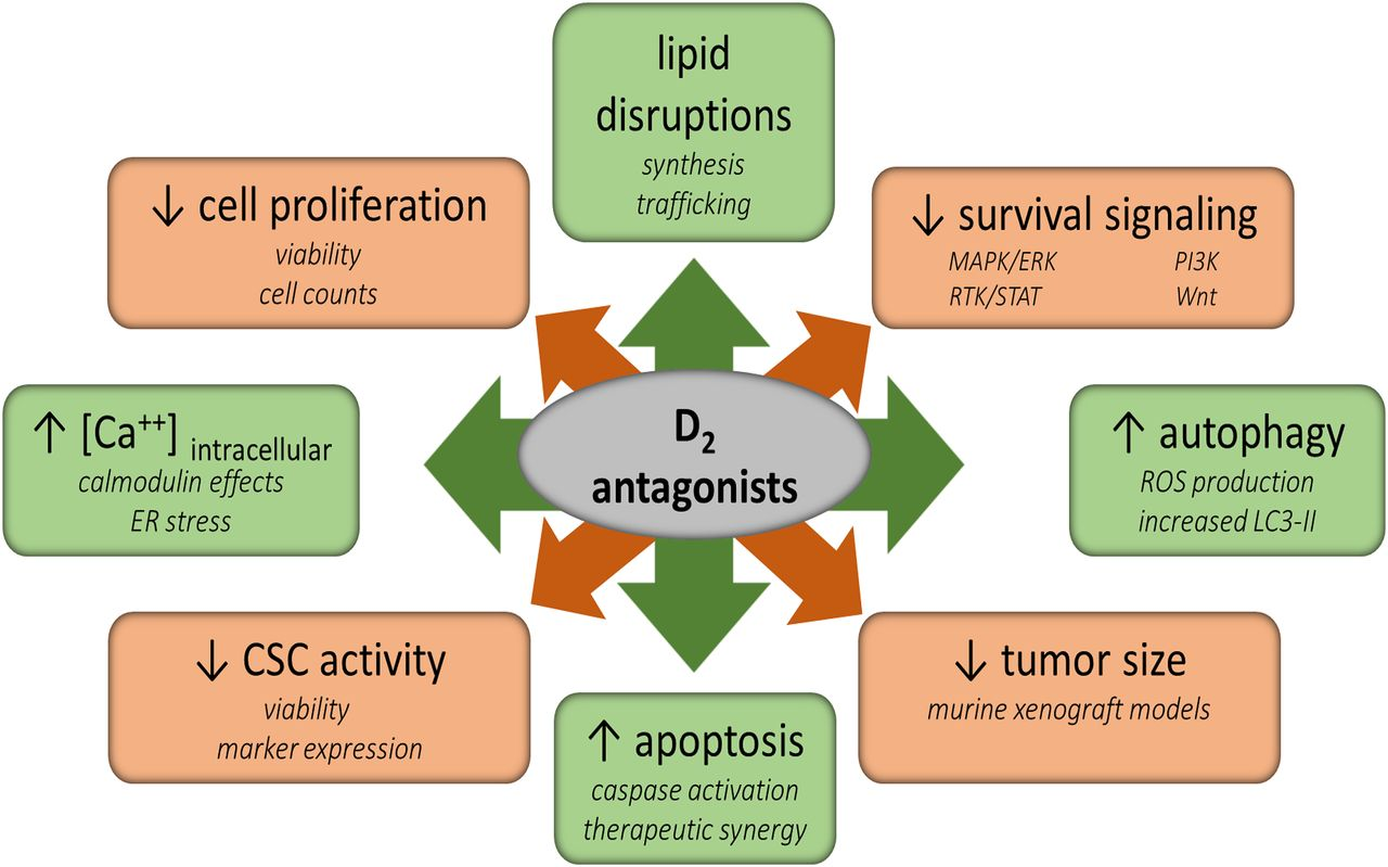 Cancer And The Dopamine D2 Receptor A Pharmacological