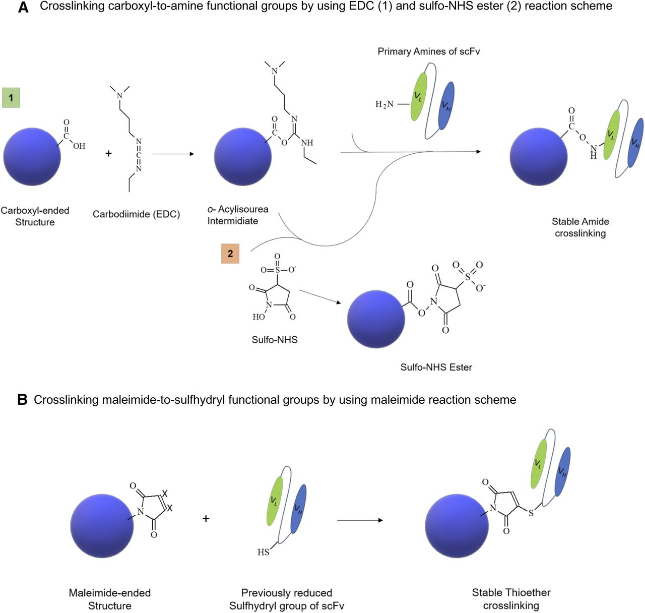 Impact of CEA-targeting Nanoparticles for Drug Delivery in