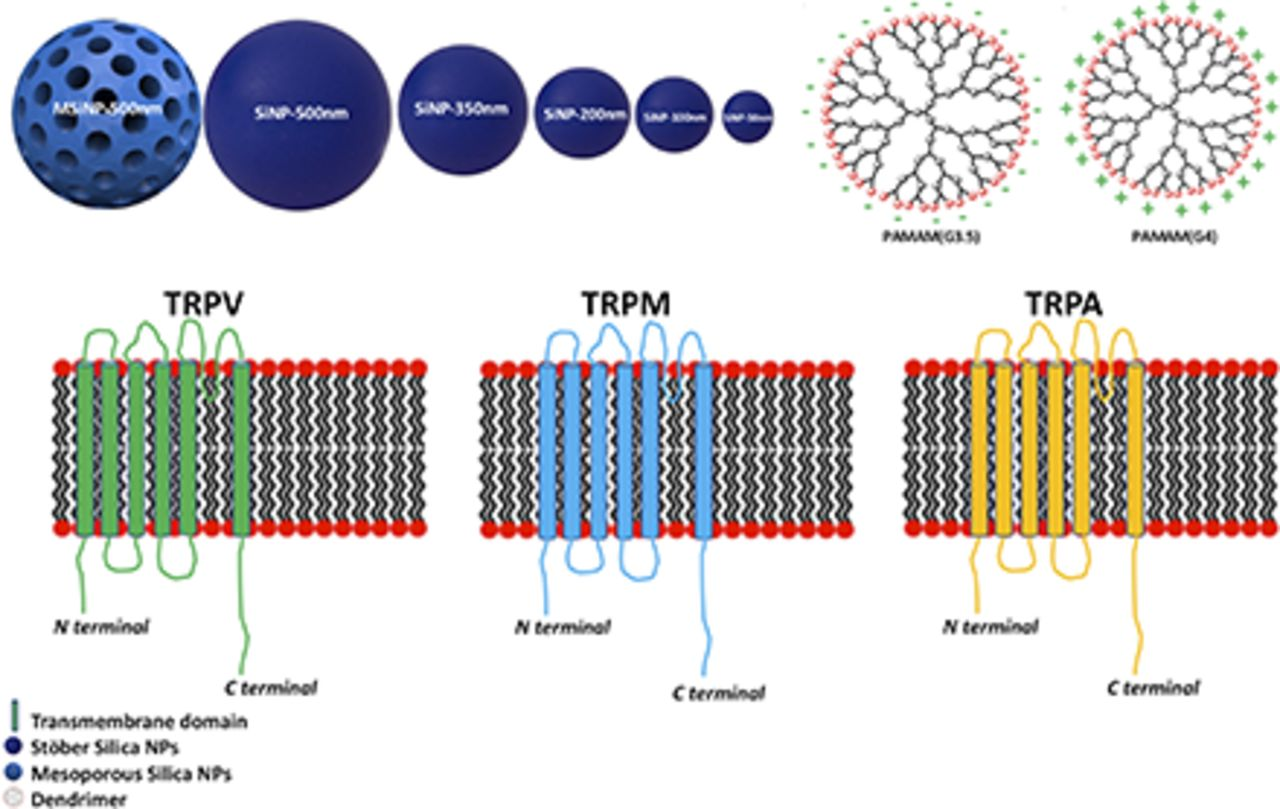 Transient Receptor Potential Ion Channel–Dependent Toxicity