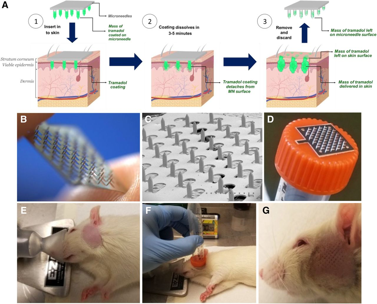 Microneedles Coated with Tramadol Exhibit Antinociceptive