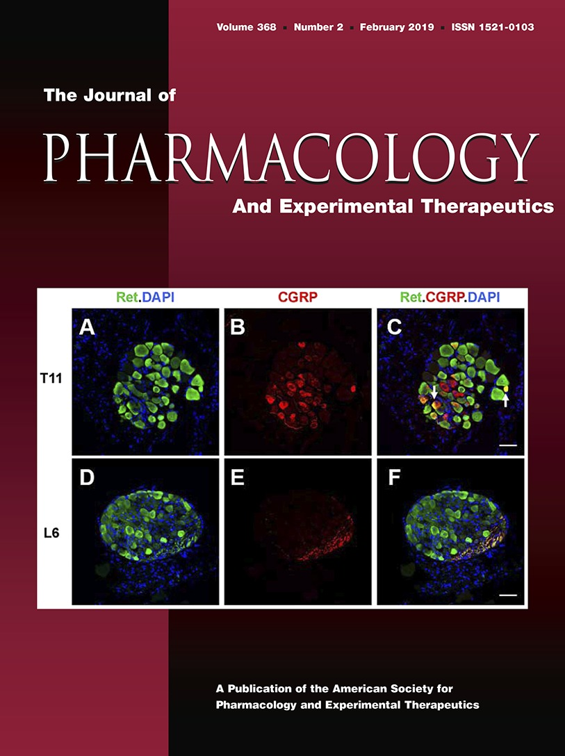 Anti-Claudin Antibodies as a Concept for Development of